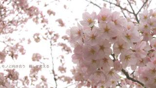 桜、さくら。平日の仏生山公園で桜を楽しむ|高松市