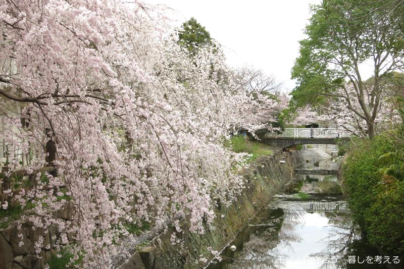 仏生山公園の桜