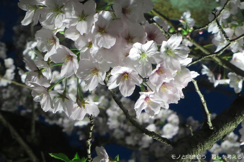 栗林公園夜桜ライトアップ