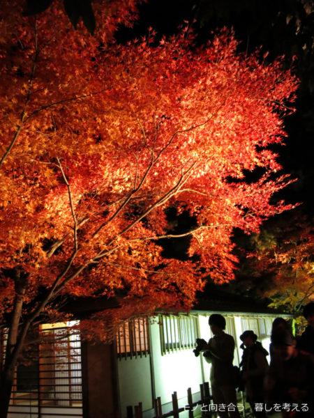 栗林公園、紅葉のライトアップ2014年
