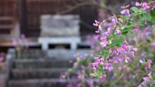 萩寺として知られている最明寺で、癒しの時間を過ごす|高松市