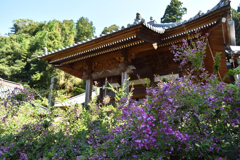 最明寺の萩
